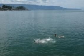 Pergi Berenang (الذهاب للسباحة)