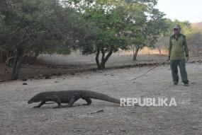 Het toeristeninkomen op het eiland Komodo bereikt 32 miljard Rupiah