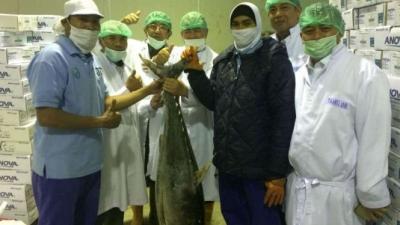 Tonijnen uit west sumatera werden naar Japan en Verenigde staten geexporteerd
