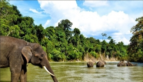 Tangkahan: Populaire Ecotoerisme in Noord Sumatera