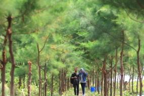Karangsong 的红树林地区
