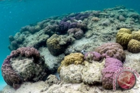 Underwater tourism and coral reef in Teluk Buton waters of Natuna in Riau Islands
