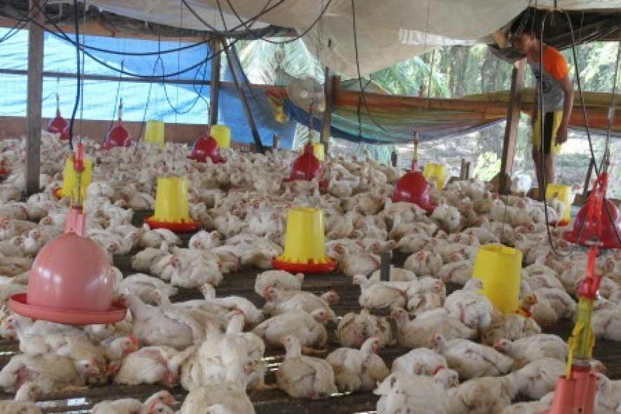 Blitar poultry farmers point to prolonged drought for 30% decline in egg production