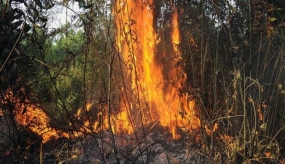 Be watchful of Forest and Land Fire