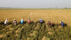 INDONESIA ON THE WAY  TO FOOD SELF-SUFFICIENCY