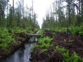 Indonesia as information center of tropical peat-land ecosystem