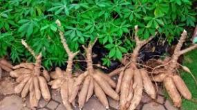 Kadedemes, un plat à base de la peau de manioc