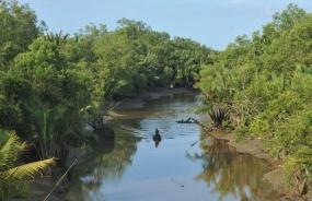 Rehabilitasi Hutan Bakau perlu Libatkan Masyarakat