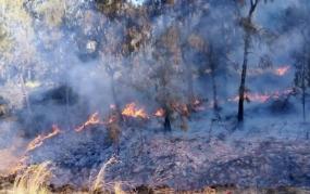 Waspada Kebakaran Hutan dan Lahan
