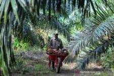議員:パーム油は国民経済の戦略的な商品