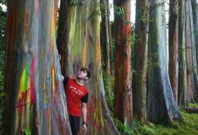 東ジャワ州のボンドウォソの/魅力的なPELANGI(虹の森)