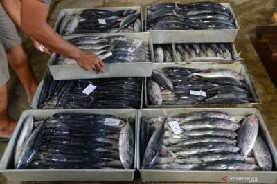 海洋和渔业部正在鼓励冷冻仓库管理人员帮助小型渔民